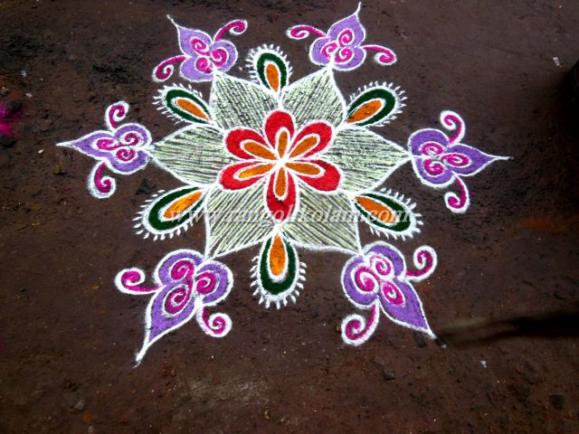 white with pink kolam